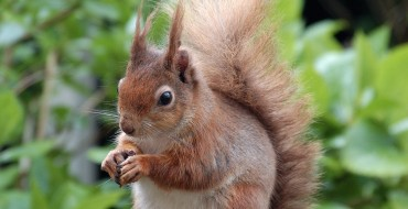 Haven of Wild Life at Brownsea Island