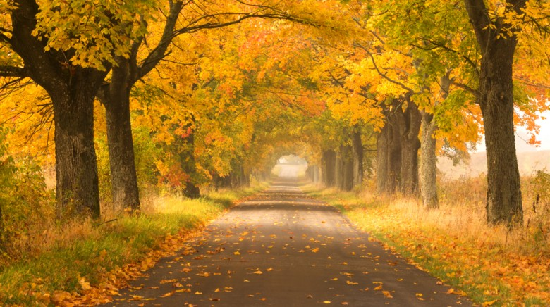 Top Tips for Autumn Road Trips