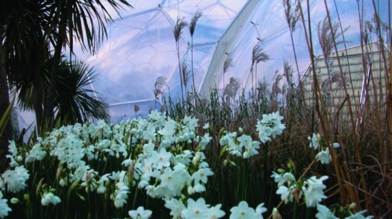 Eden Project: Cornwall's 8th Wonder of the World