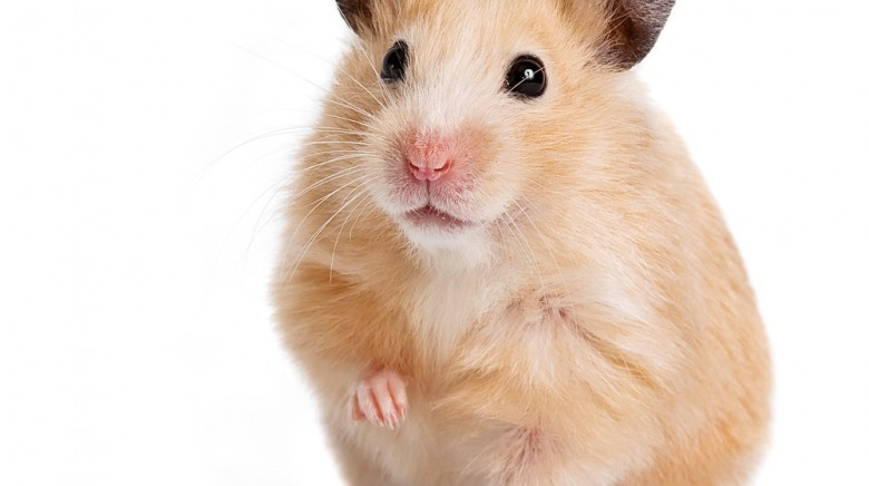Our Hamster Hell